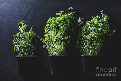 Photograph - Three Pots With Different Herbs On Black Background by Michal Bednarek