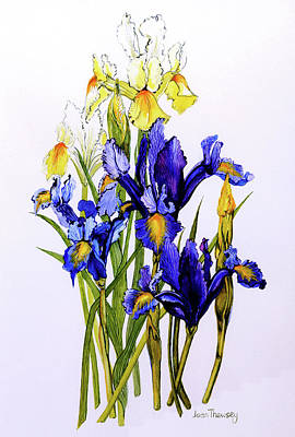 Three Purple And Two Yellow Iris With Buds Art Print by Joan Thewsey