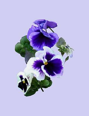 Photograph - Three Purple Pansies In A Row by Susan Savad