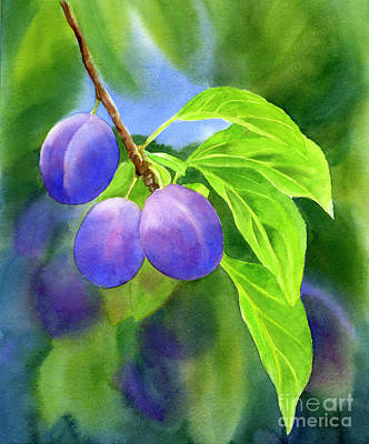 Fruit Tree Art Painting - Three Purple Plums With Background by Sharon Freeman