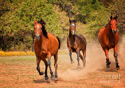 Photograph - Three Racers by Sari ONeal