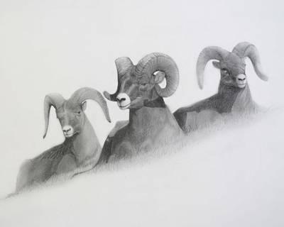 Ram Sheep Drawing - Three Rams by Megan Chambers
