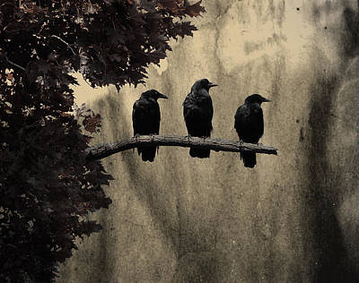 Corvidae Photograph - Three Ravens Branch Out by Gothicrow Images