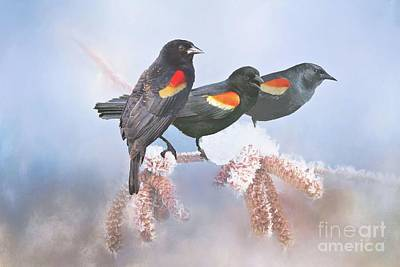 Photograph - Three Red-winged Blackbirds In A Row by Janette Boyd