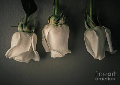 Three Roses Original