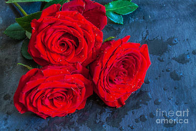 Three Roses On Slate Still Life Art Print by Randy Steele