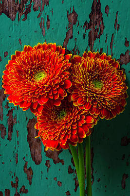 Chipping Paint Photograph - Three Rustic Mums by Garry Gay