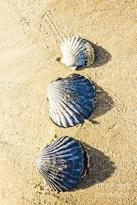 Three Scallop Shells Art Print by Jorgo Photography - Wall Art Gallery