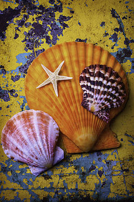 Three Sea Shells And Starfish Art Print by Garry Gay