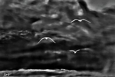 Photograph - Three Seagulls by Gina O'Brien