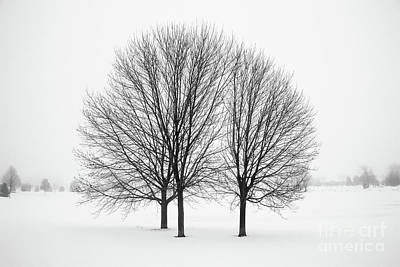 Photograph - Three Sentinels by Kevin McCarthy