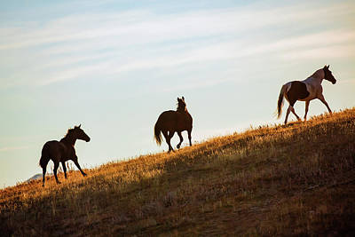 Quarter Horses Photograph - Three Side by Todd Klassy