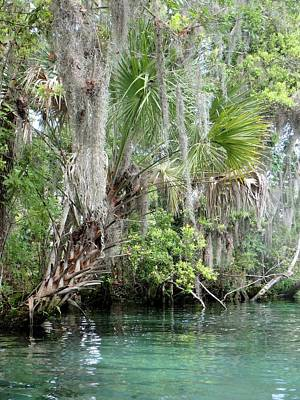Photograph - Three Sisters Springs Palm by Sheri McLeroy