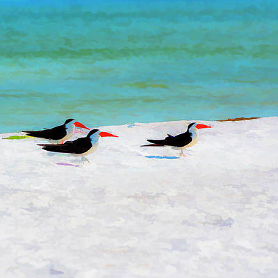 Shore Lines Photograph - Three Skimmers by Marvin Spates