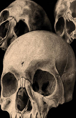 Three Skulls Are Better Than One Art Print by Phil Spaulding