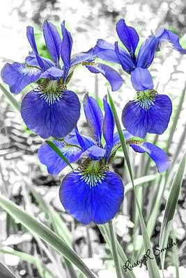Digital Art - Three Small Blue Iris. by Rusty R Smith