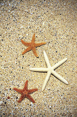Photograph - Three Starfish On Sand by Kyle Rothenborg - Printscapes