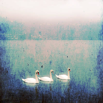 Swan Photograph - Three Swans by Joana Kruse