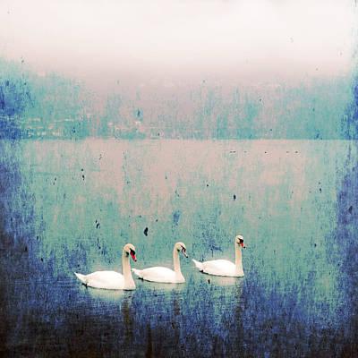 Swan Photograph - Three Swans by Joana Kruse