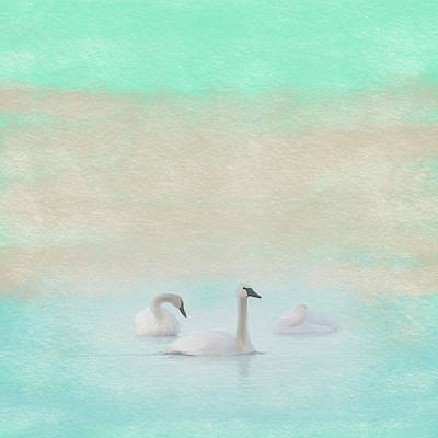 Photograph - Three Swans Pastel Square by Patti Deters