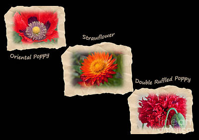 Three Tattered Tiles Of Red Flowers On Black Art Print by Valerie Garner