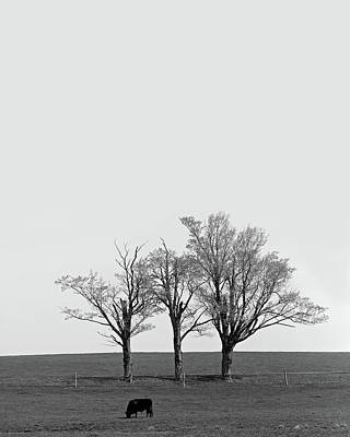 Photograph - Three Trees And A Bull by Brooke T Ryan
