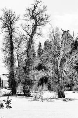 Photograph - Three Trees Bw by Belinda Greb