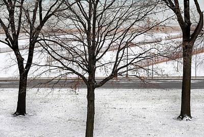 Three Trees Print by Dan Holm