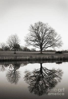 Photograph - Three Trees by David Waldrop