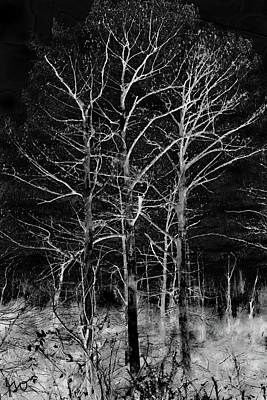 Photograph - Three Trees In Black And White by Gina O'Brien