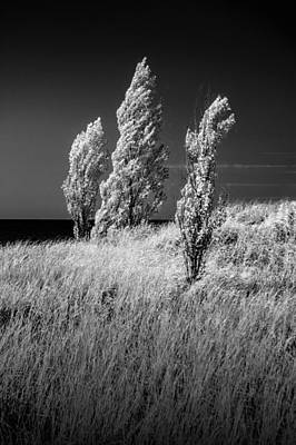 Abstract Animalia - Three Trees  in Black and White Infrared by Randall Nyhof