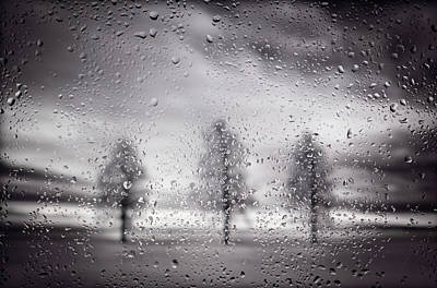 Pop Art Rights Managed Images - Three Trees In BW on a Rainy Day Royalty-Free Image by Steve Gadomski