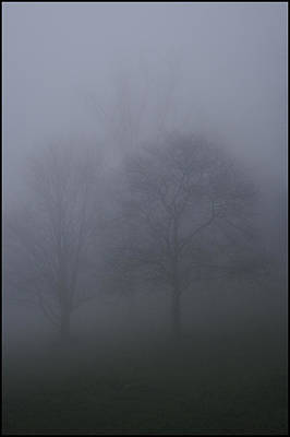 Photograph - Three Trees In Fog Mount Dandenong by Werner Hammerstingl