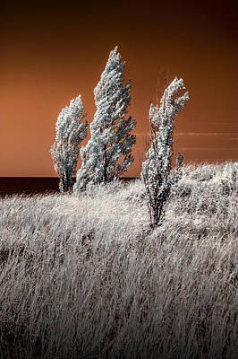 Photograph - Three Trees  In Infrared On Top Of A Grassy Dune by Randall Nyhof
