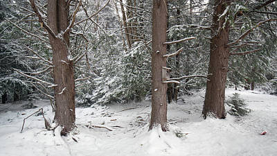 Photograph - Three Trees In The Snow by Jack Nevitt