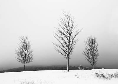 Minimal Photograph - Three Trees In Winter by Brooke T Ryan