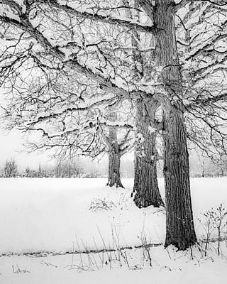 Photograph - Three Trees by Kendall McKernon