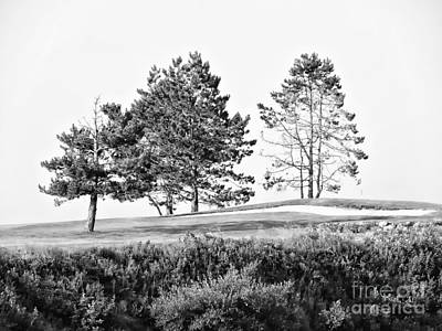 Photograph - Three Trees by Marcia Lee Jones