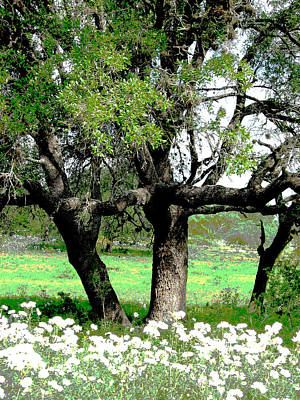 Photograph - Three Trees by Monique Montney