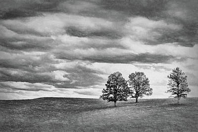 Photograph - Three Trees - Nebraska by Nikolyn McDonald