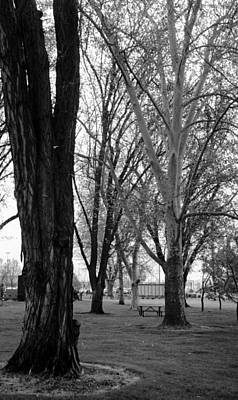 Photograph - Three Trees by Teri Schuster