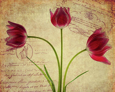 Photograph - Three Tulips Letter by Rebecca Cozart