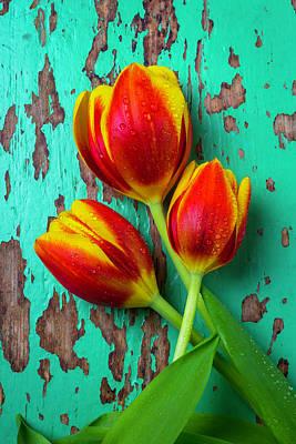 Three Tulips On Green Board Art Print by Garry Gay