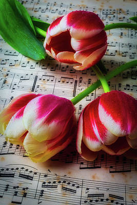 Three Tulips On Sheet Music Art Print by Garry Gay