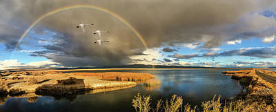 John Williams Digital Art - Three Tundra Swans And A Rainbow by John Williams