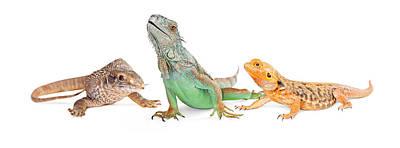 Fantasy Royalty-Free and Rights-Managed Images - Three Types of Lizards-Vertical Banner by Susan Schmitz