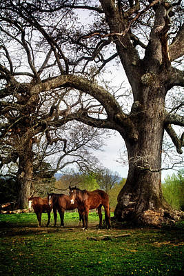 Horse Photograph - Three Under A Tree by Greg Mimbs