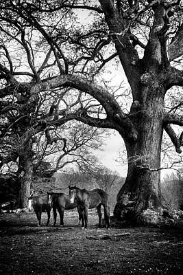Horse Photograph - Three Under A Tree In Black And White by Greg Mimbs