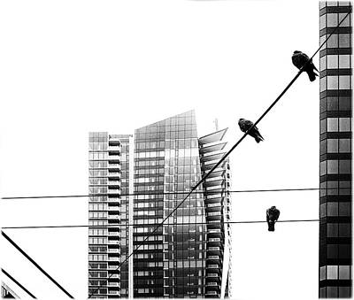 Photograph - Three Urban Pigeons by Peter V Quenter
