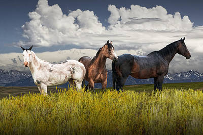 Photograph - Three Western Horses by Randall Nyhof